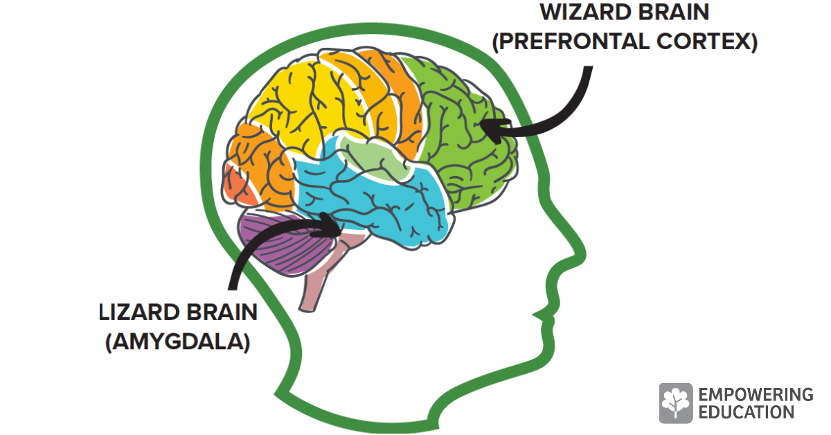 Mindfulness impacts the wizard brain and the lizard brain